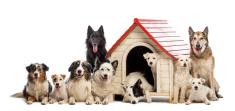 Under Dog Kennels Doggy Daycare Dallas