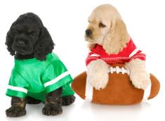 Under Dog Kennels Doggie Daycare Dallas