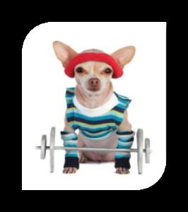 Under Dog Kennels Dog Exercise & Play