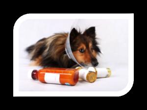 Under Dog Kennels Dog Medication Administration