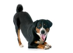 Under Dog Kennels Indoor Dog Play