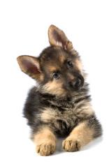 Under Dog Kennels Doggy Daycare