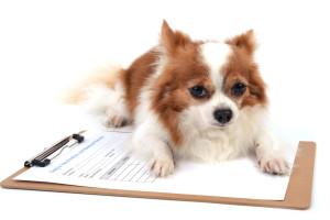doggy daycare paperwork